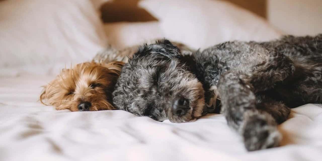 Pet Friendly Hotel Fees