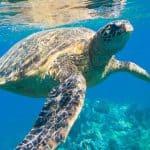 Scuba Diving in Miami Beach