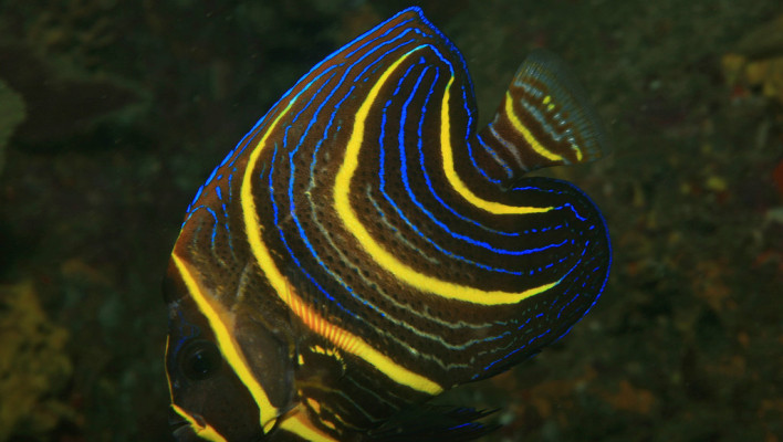 scuba-diving-miami-beach