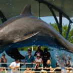 Visiting the Miami Seaquarium