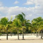 Visiting Crandon Park Beach